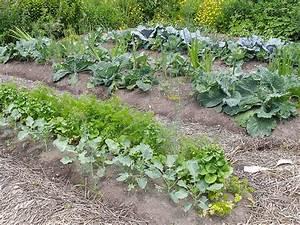 Plantes Amies Et Ennemies Au Potager : associations de plantes au potager ~ Melissatoandfro.com Idées de Décoration