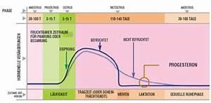 Zyklus Nach Pille Absetzen Berechnen : pyometra kastrieren ja nein und noch ein paar fragen gesundheit das gro e ~ Themetempest.com Abrechnung