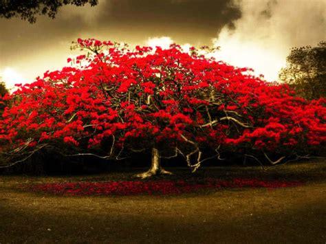 Red Tree Wallpaper Wallpapersafari