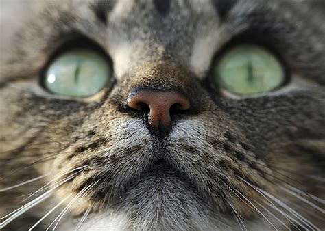 cat intelligence  cognition  cats smarter  dogs