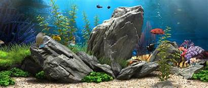 4k Aquarium Ultra Wallpapers 1080p Fish Wide
