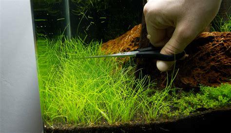 aquarium pflanzen düngen nano aquarium einrichten experiment teil 8 aquariumeinrichten wie richte ich mein