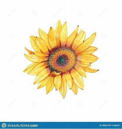 Watercolor Sunflowers Bright Clipart Cards Handpainted Greeting