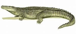 Deinosuchus rugosus v Purussaurus brasiliensis