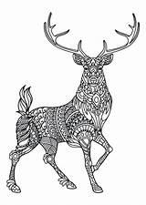 Coloring Deer Hunting Elk Printable Getcolorings Colorings sketch template