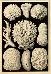 Pin By The Obsolete Naturalist On Nhp Ernst Haeckel
