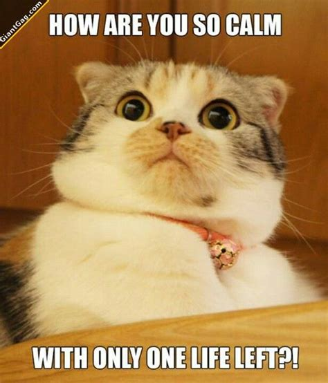 Funny Cat Pics With Captions  60 Pictures! Funnycatsgifcom