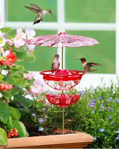 Feeder Aspects Duncraft Bird Feeders Hummingbird Birds