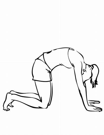 Coloring Yoga Pose Pages Cat International Cure