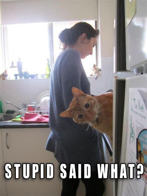 Stupid Funny Memes - funny stupid people memes