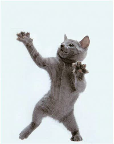 images  dancing cats  pinterest cats