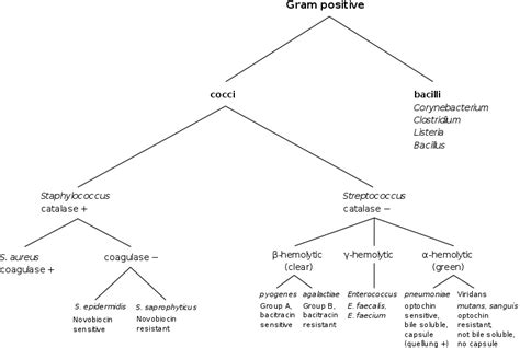 filegram positive classificationsvg wikimedia commons
