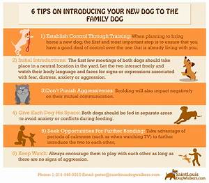 6 tips on introducing your new dog to the family dog With how to introduce a new dog to an aggressive dog