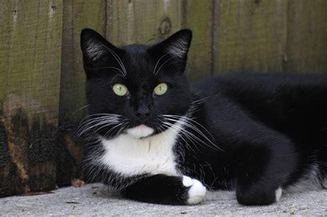 Black And White Cat Wallpaper Wallpapersafari