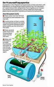 Pdf  Free Detailed Instructions On Making A Aquaponics