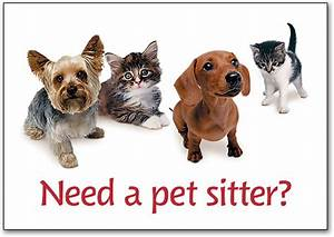 things to consider when choosing the right pet sitter With the dog sitter