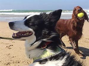dog walker sharon curran weston dog friendly cornwall With dog walking services near me