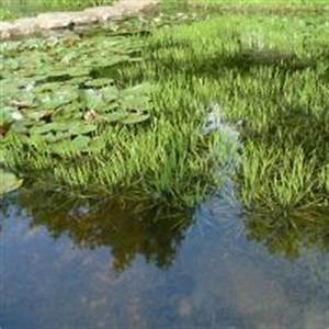 Wasserpflanzen Teich Kaufen : naturagart shop wasser reinigung teichpflanzen ~ Michelbontemps.com Haus und Dekorationen