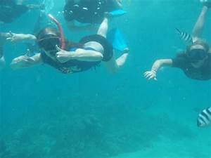 Volunteer In The Mauritius As A Marine Conservation Volunteer And Research Coral Reefs