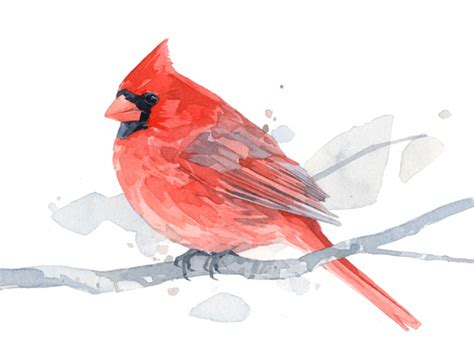 color cardinal cardinal watercolor painting archival print david