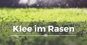 Spritzmittel Gegen Unkraut Im Rasen : klee im rasen garten schule ~ Michelbontemps.com Haus und Dekorationen
