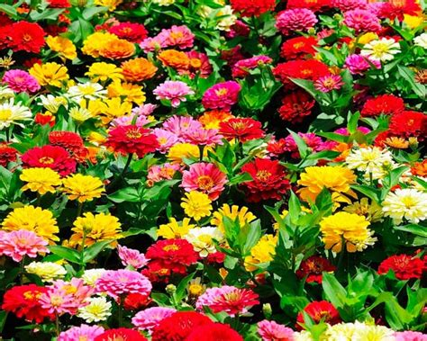 Types Of Flowers To Plant For Summer