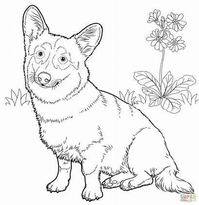 Corgi Coloring Welsh Pages Pembroke Dog Printable