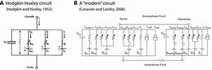 Examples Of Neuronal Circuits  A  Electrical Circuit Of