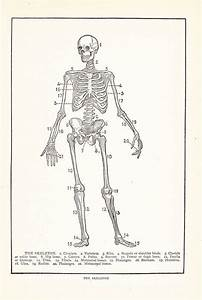 1000  Images About Skeleton Illustrations On Pinterest
