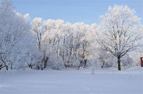 landscaping in winter leaves shrubs oh my fall landscaping tips
