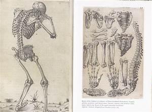Simonblog Major Design  Human Anatomy Book