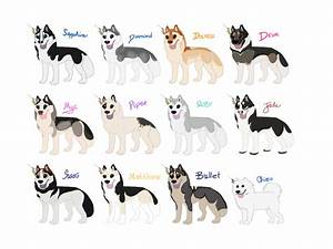 SSC RNG Entry Group #1 - Huskies and Samoyeds by xMush ...