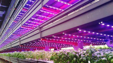 indoor farming led lights thousand plus illumitex lights installed at innovative