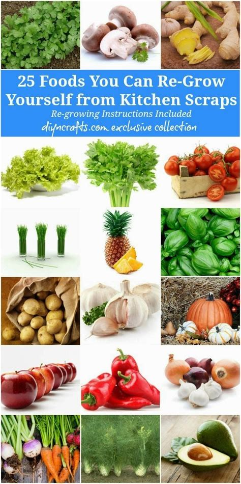 you cuisine 17 best images about gardening regrow plants on