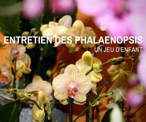 bureau d aide juridictionnelle tailler une orchidee en pot 28 images nouvelle orchid