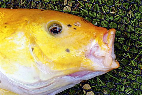 understanding  fish feed angling times