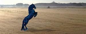 SCUDERIA SPORT HORSES LA ROBINIA e commercio cavalli