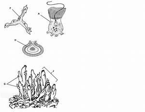 Diagram  Photosynthesis Diagrams Worksheet Biology