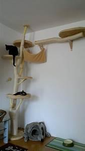 More For Cats Kratzbaum : 65 best balu images on pinterest pets cat furniture and kittens ~ Whattoseeinmadrid.com Haus und Dekorationen