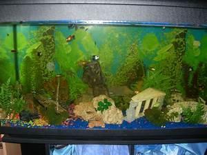 Poisson Aquarium Eau Chaude : mon aquarium d 39 eau chaude ~ Mglfilm.com Idées de Décoration