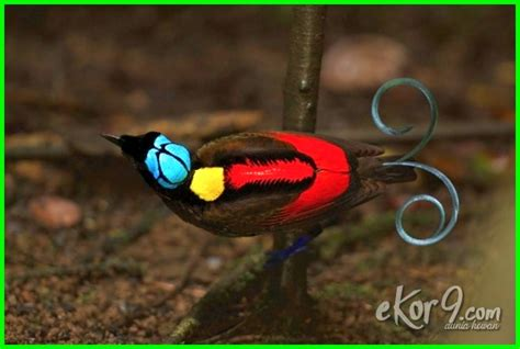 Burung ini mempunyai jenis yang cukup varian salah satunya seperti di gambar namun yang paling bagus yaitu jenis yang. 15 Hewan Langka di Indonesia Beserta Gambar, Penjelasan dan Daerah Asalnya - Ekor9.com