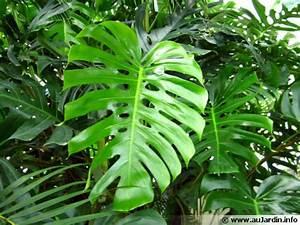 Plante Tropicale D Intérieur : les plantes d polluantes d 39 int rieur ~ Melissatoandfro.com Idées de Décoration