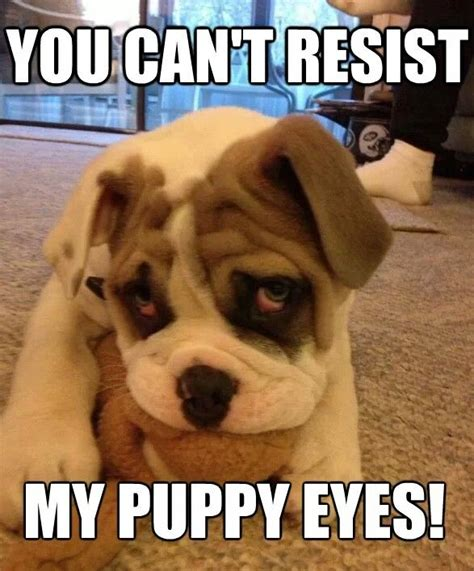 Puppy Dog Eyes Meme - tired meme dog 2017 2018 2019 ford price release date reviews