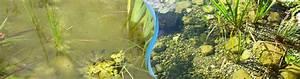 Algen Im Teich Entfernen : teichpflege algen ~ Orissabook.com Haus und Dekorationen