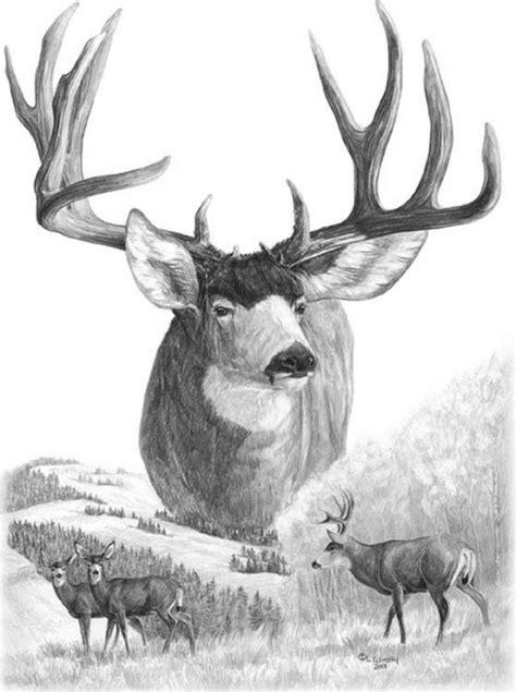 deer sketches images  pinterest deer sketch