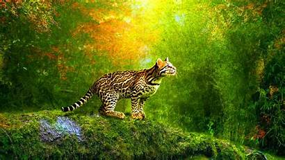 Animated 3d Cat Wallpapers Animation Windows Quotes
