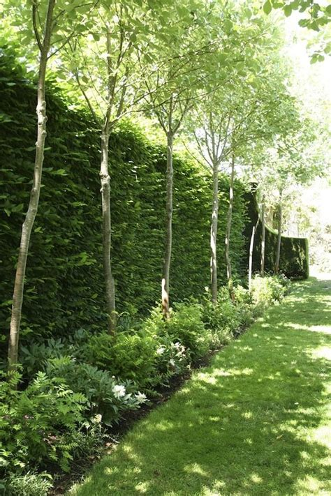 trees for privacy 10 different and great garden project anyone can make 9 gardens privacy hedge and ferns
