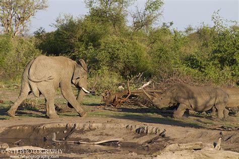 tense stand   elephant  rhino africa