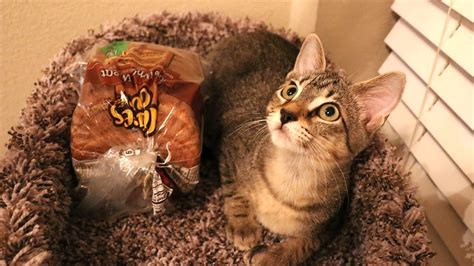 dude  cat  loaf  bread youtube