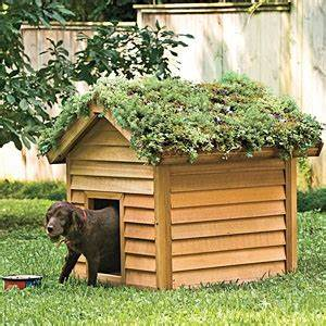 Diy doghouse green roof petdiyscom for Green dog house